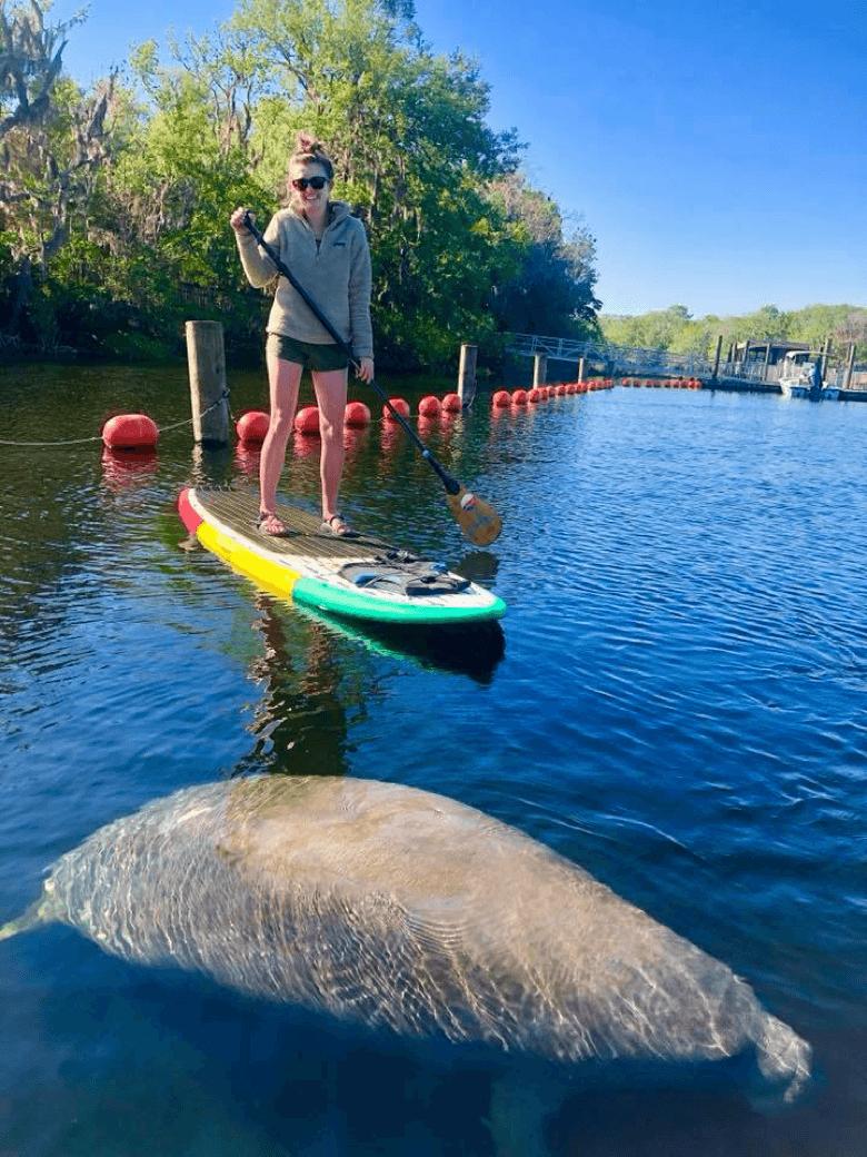 Paddleboarding with Manatees